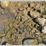 La Camosciara nel PNALM – Area di Sosta e Fiume Sangro