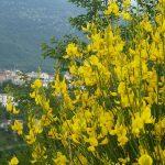 Campoli Appennino un piccolo Borgo del Lazio